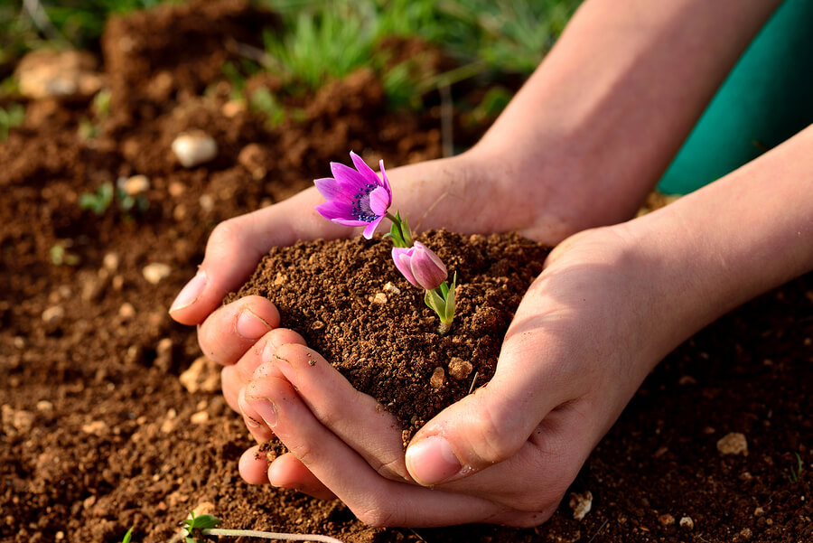 person holding soil with a small pink flower in it