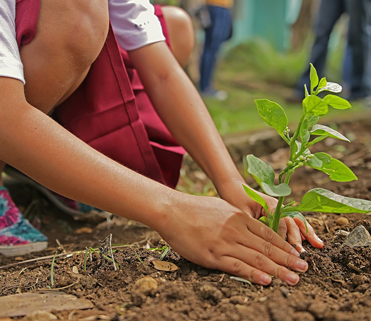young person planting a shrub
